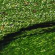 清流に泳ぐ梅花藻