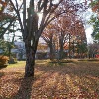 大学キャンパスの木々①