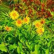 575号 母、100歳の誕生日。石岡市八郷地区の秋の植物。