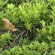 雨の合間に鳥撮り散歩に狭山湖に(3日―4日)