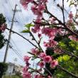 春がやって来ましたね〜