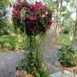 花の世界大会in ハウステンボス 続き