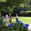 紫陽花・縮景園 180612