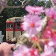 トロッコ列車。