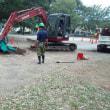 台風禍公園の木々無残なり