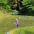 茶臼山へ 3