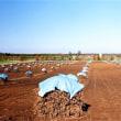 力強い北海道農業の構築に向けて、技術が明日を拓く ~品種開発の観点から~