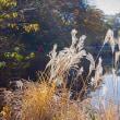 2017.12.03 港区 自然教育園: 初冬の沼景色