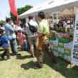 「第22回子どもフェスティバル2018」開催報告2