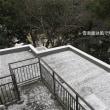 雪の日とチビ家族たち