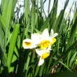 春の湯村山