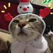 かわいい かわいい ねこクリスマスちゃん