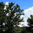 青空に白い雲(稽古会の帰りに)
