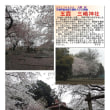 花巡り 「桜-その445」 五霞 三嶋神社