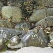 石神井川は、もう野鳥がいないのか