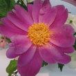 第29回いしかわ四季の花協会展に行って来ました。NO.4(嵯峨御流・小原流)