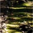 秋の日差し 苔に落ち葉