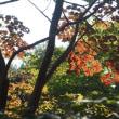 本園へも~神代植物公園⑦~