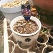 にょろのヘアカット & 我が家の植物たち