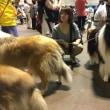 コリークラブ 動物愛護ふれあいフェスティバルに参加する
