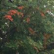 紅葉始まる