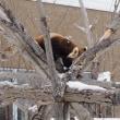 ☆冬の円山動物園☆