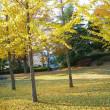 美しい銀杏の樹 野球を楽しく