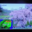 4/22 バンキシャは昨日ここから放送した 三春の滝桜