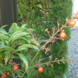 元気な植物-ナン