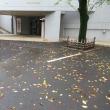 落葉の季節
