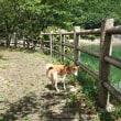 昼散歩は河内貯水池