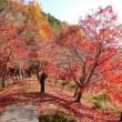 稲武から、紅葉めぐり(2)