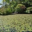 神戸市立森林植物園の(アジサイ)が見頃 。 ( 神戸市) 2018.06.17