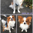 犬用バスローブ!