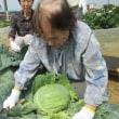 畑にて収穫(^^♪