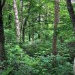 今時の森の中で