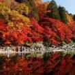 2017年 香嵐渓に紅葉を見に行った現在の報告