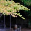 雨の後楽園紅葉