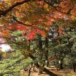 岡山県理学療法士会 創立50周年記念式典