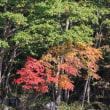 ぶらり旅・北八ヶ岳ロープウェイ⑧山麓駅へ(長野県茅野市)