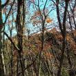 冬を感じさせる木立。天然のドライフラワーも。