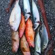 魚の生態を熟知するのは難しい