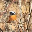 湖の野鳥たち
