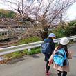 『桜便り』 大磯駅