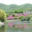 我家のお花そして 難波池の水辺風景