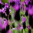 花は初夏の色