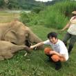 ラオスのジャングルを象と歩く