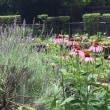 昭和記念公園紫陽花だけではない