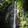 潜竜ヶ滝(ヨシ)