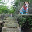 大浪池から韓国岳に登る。